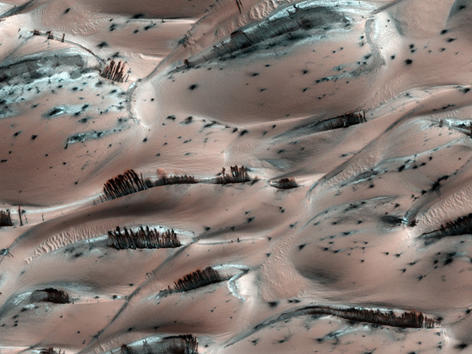 photograph of mars surface that looks like it has trees on it