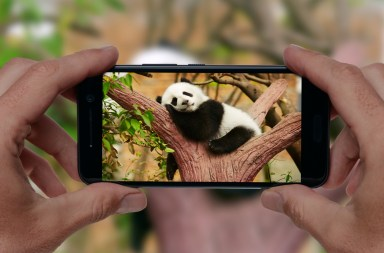 smartphone china panda