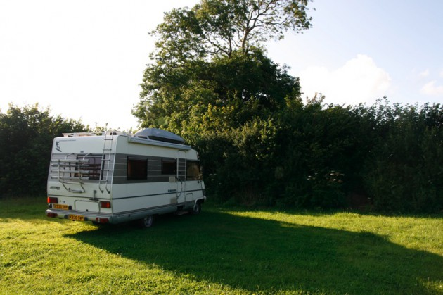 Nettle in Pembrokeshire
