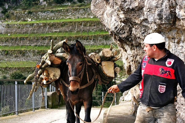 Guy with horse carrying logs
