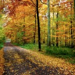 Autumn-Woods.jpg