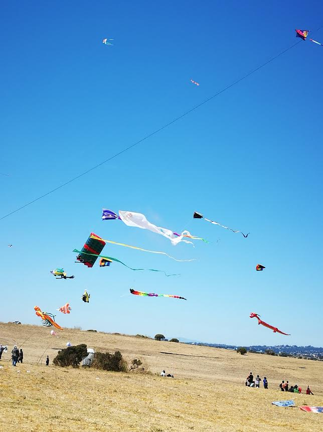 Attendees of the Berkeley Kite Festival observe the many varieties of kites in the sky. Photo credit Marvin Leung.