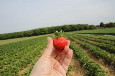 Eine Pfelderdbeere