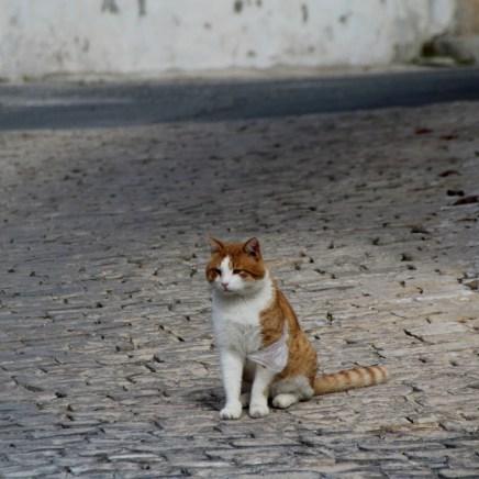 Zypern Katzen