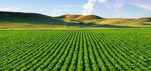 Five trends in Agricultural Finance in Africa