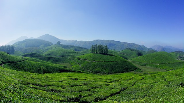 places_to_visit_in_india_munnar