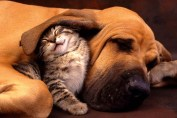 cat and dog , dog and cat , dog and cat together