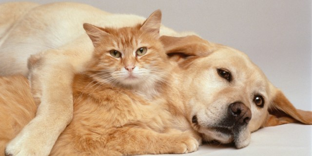 cat and dog together, pets