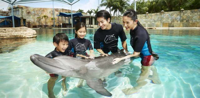 dolphin lagoon , best places to visit in singapore