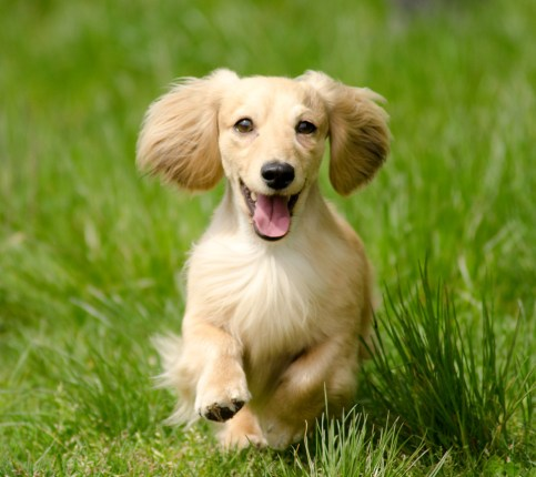 inspires, dogs, stress-buster, happiness, pleasure
