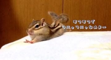 シマリスの朝のストレッチ Chipmunk s morning stretch   YouTube