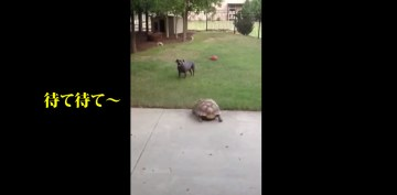 Sheldon and Dolly Playing Chase   YouTube