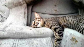 何でそんなところで…仏像で眠る猫にキュン