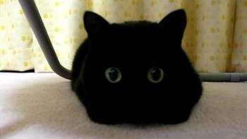 瞳に注目!とってもキュートな黒猫