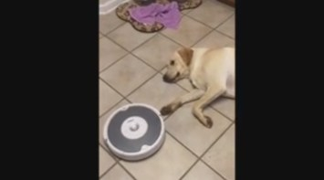 Roomba vacuum cleans the floor around lazy dog   YouTube