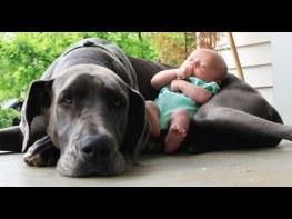 犬と子供たちが兄弟だということがわかるまとめた映像が素敵すぎる