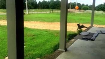 風船で見事にリフティングする犬の躍動感が凄い。最後はやはり・・・