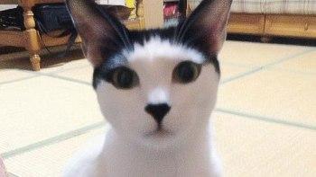 気品あふれる猫が食べた煮干しの姿がこれまた上品だと話題に!