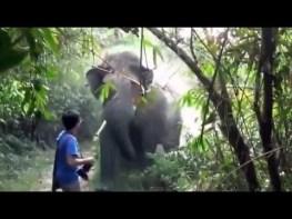 象の撮影中に象が突進してくる! この男性がとった行動が世界中で話題に