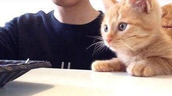 thumb-子猫が興味津々で見ているものは・・・何だろう。