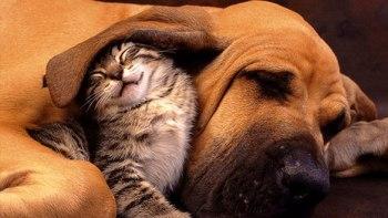 ずっと友だち!-猫と犬のすてきな関係!