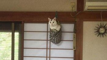 thumb-ミノムシみたいな猫が発見されTwitterで話題に!