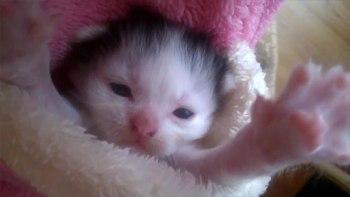 まだちっちゃな赤ちゃん猫。その仕草にキュン(-´ェ`-)