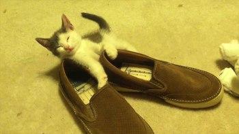 もっと他に寝るところなかったの?仔猫が靴にもたれて夢の中に