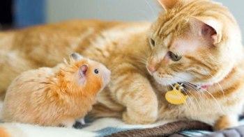 thumb-トムとジェリー?-猫とハムスターの仲良し画像にホッコリ(。・∀・。)
