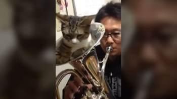 thumb-「おしりがムズムズするにゃ」猫が金管楽器の中で寝ているけどちょっと吹いてみた