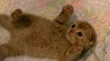 にゃ、にゃんだお前はー可愛すぎるまんまる仔猫