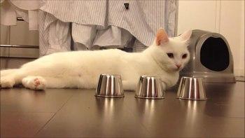 thumb-みなさんのお家の猫ちゃんはできる?-猫の集中力が凄い!