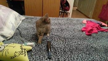 thumb-ベッドの上で猫がクシャミ!-するとその後ろでは・・・きっとあなたも笑顔になる5秒の動画
