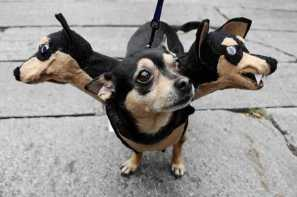 diy-halloween-pet-costumes-12