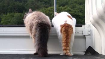 軽トラの荷台で遊ぶ2匹の猫の尻尾を見てるだけで癒される