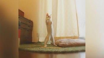 「逆ライザップ」と言われた猫のビフォアーアフター!