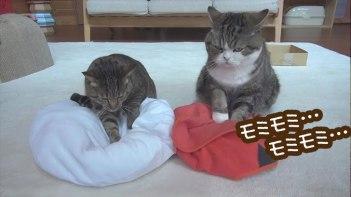 猫モミで寝床を一生懸命作ったネコ!-寝る準備万端!-とおもったら・・・