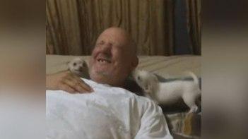 大変!-おじいちゃんが2匹のチワワに襲撃!-おじいちゃんの幸せそうな顔にほっこり