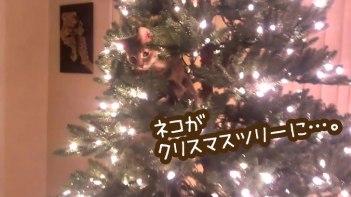 ネコがクリスマスツリーに登ろうと頑張っています・・・でもやっぱり最後は予想通りのオチが待っています!
