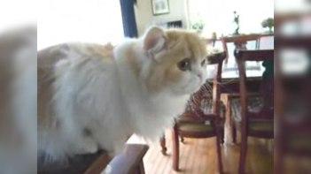 喋る!「おはよう」と挨拶するとちゃんと「おはよう」と挨拶するネコ