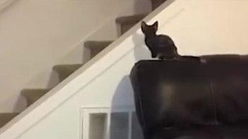 ジャンプを失敗した子猫。予想を裏切る滑り台状態!