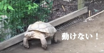 Turtle Rescues His Stranded Friend   YouTube