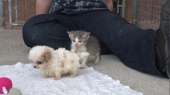 子猫と子犬がただ一緒に遊んでいる動画・・・でもとっても癒やされる!