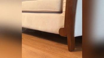 ソファの下に子猫が・・・呼んでみると予想外の姿で登場!