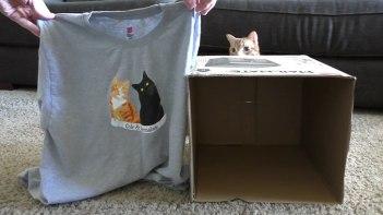 ネコと一緒に暮らす上で、知っているとちょっとだけ便利でネコも喜ぶ5つのテクニックをご紹介します!
