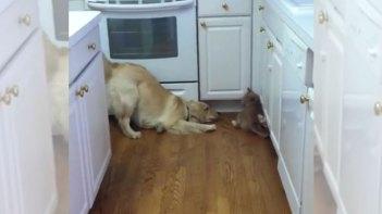 どうしてもネコと遊びたい犬とそうでもないネコ。ねこの「今そんな気分じゃない」感が凄い