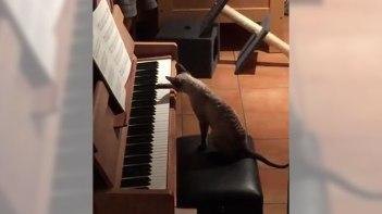 ピアノがあってネコさんがいるお家では留守中にネコさんがピアノの練習をしてるかも・・・