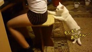 男の子に構ってもらいたくて白猫がちょっかい出しまくる!