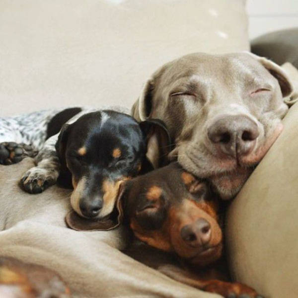 doggies_who_are_friends_are_too_cute_not_to_smile_640_11