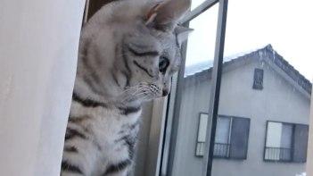 屋根に積もった雪が落ちてきた!「今の見た?」と飼い主さんに訴えかけるネコ